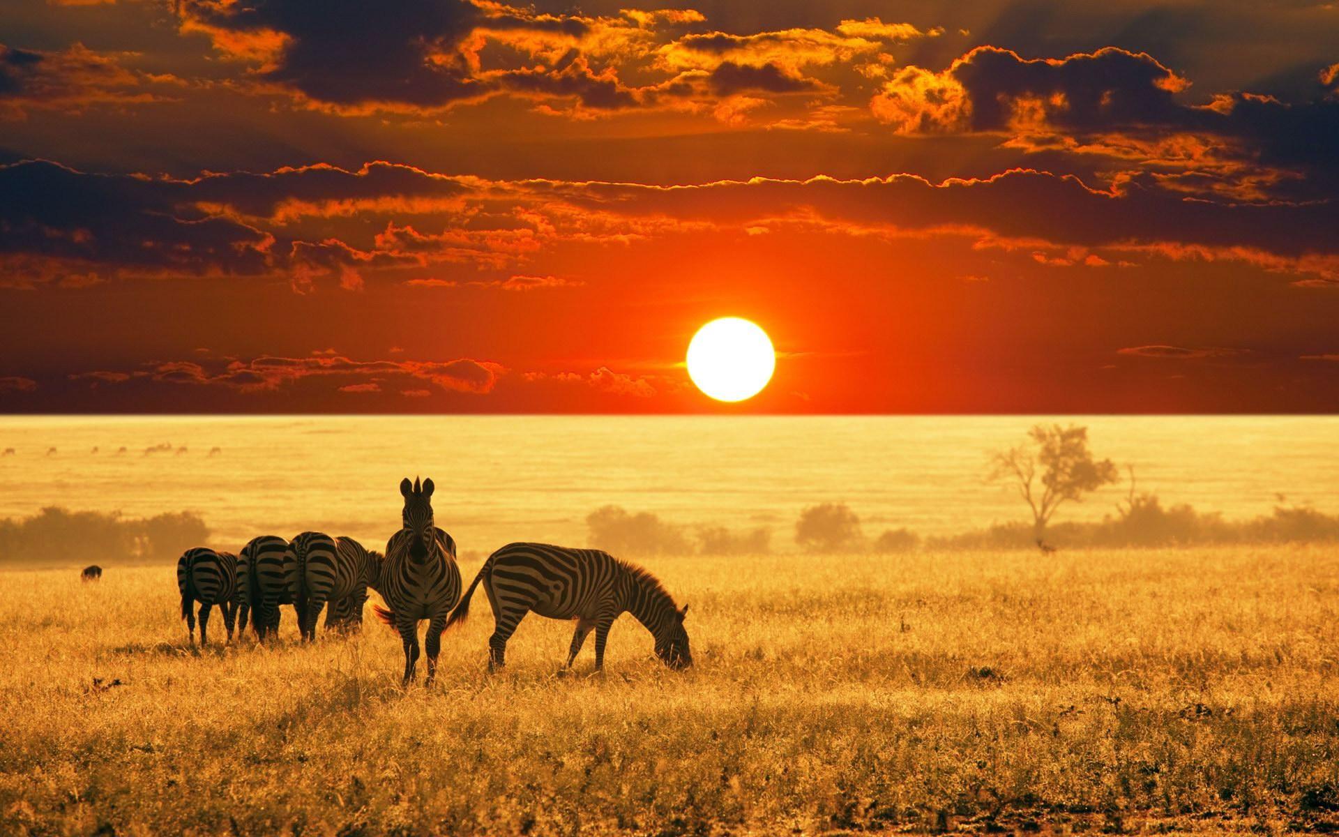 tramonti-paesaggi-natura-animali-fotografia-zebre-africa